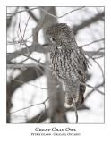 Great Gray Owl-122
