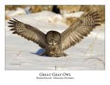Great Gray Owl-131