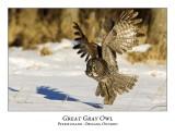 Great Gray Owl-134
