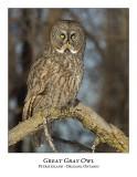 Great Gray Owl-135