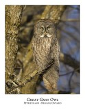 Great Gray Owl-144