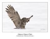 Great Gray Owl-149