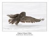 Great Gray Owl-150