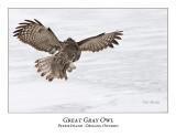 Great Gray Owl-154