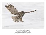 Great Gray Owl-155