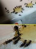 Power Ants