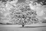 12-033 Tree