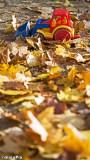 12-084 Autumn