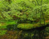 Emerald Oasis