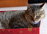 20121231_27396 The Affinity Between Cat And Box...  (Mon 31 Dec)
