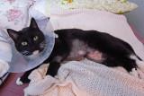 Rosie had surgery