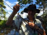 Caught a silver piranha