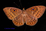 Butterfly on Deck