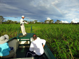 Plowing through the floating vegetation