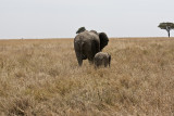 Goodbye mon and baby elephant