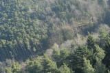der Kamera zuerst Wald