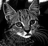 Etch-a-Sketch Kitty
