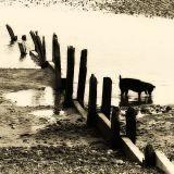 Beach Dog II.