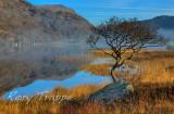 Lonely tree at Llyn Dinas.jpg