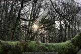 Ecclesall Woods, Sheffield - December 2012