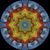 lilcat4436c_Pine Palace_Pine Lily