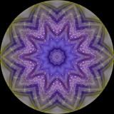 genand4586h_Purple Drops_Andrews' Bottle Gentian
