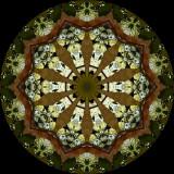 magtri7228h_Star Burst_Umbrella Magnolia