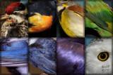 chakra bird originals