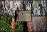 redwood seasons originals