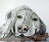 Let Sleeping Dogs Lie watercolor sketch 12x12