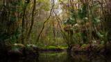 Pottsburg Creek