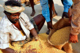 Tamil Gold