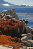 Vivid Rocks