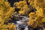 Virgin River Cottonwoods