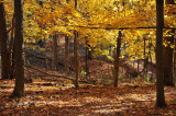 On My Way Home - Rowe Woods