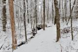 Rowe Woods Trail Bridge In Snow