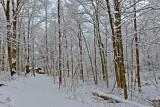 Snowy East Powel Crosley Lake Shelter