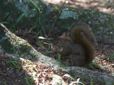 06 Squirrel.jpg