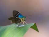 38 Butterfly.jpg