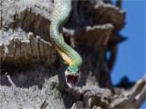 219 Snake.jpg