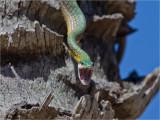 220 Snake.jpg
