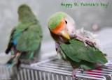 Linus & Mr. Lucy wish you a Happy St. Patricks Day!