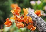 Dry Season Beauty