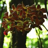 orchids 07.jpg