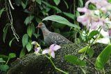 bird 37.jpg