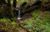 Purisima Creek Trail