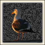Whom Among Us Knows A Seagull's Mind?