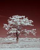 Old Tree-5504.jpg