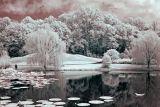 Meadowlark-5536-1.jpg