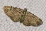 Green Pug (Pasiphila rectangulata), #7625